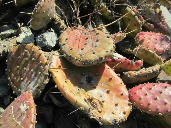 Malecon:                   Cactus for Tequilla!  jaja!