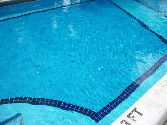 Inverrary All Inclusive Vacation Resort:                   Leaves in pool 24/7