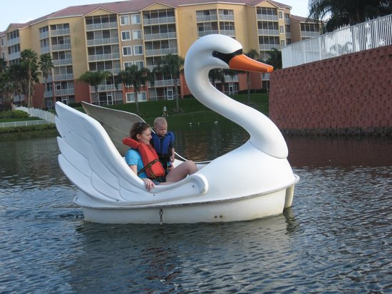 Westgate Vacation Villas Resort & Spa:                   Paddle the Swan