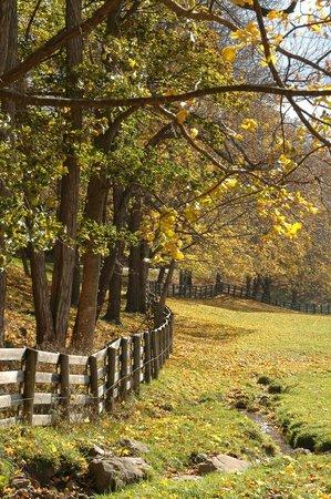 Roseloe Motel : fall view from Gath Newell