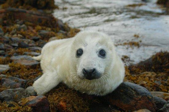 Am Bothan Bunkhouse: A Harris seal pup