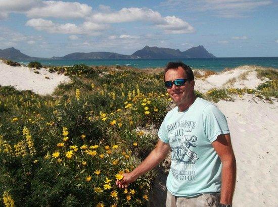 Ruakaka Beach :                   beautiful