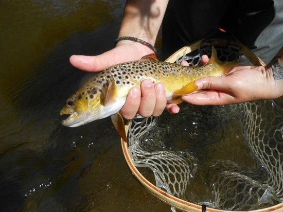 Pere Marquette River Lodge:                                     This is why you stay at the PM Lodge!