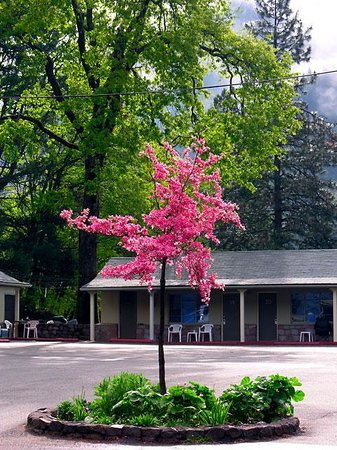 Dunsmuir Lodge: The baby dogwood, circa 2005...