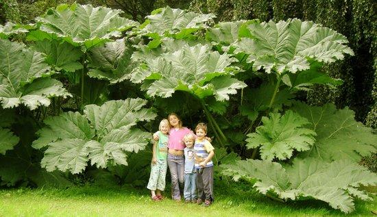 Children enjoy the garden - Picture of Upton Castle Gardens, Tenby ...