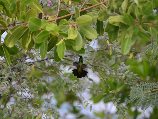 Nelson's Dockyard:                                     Saw a Humming bird - FANTASTIC