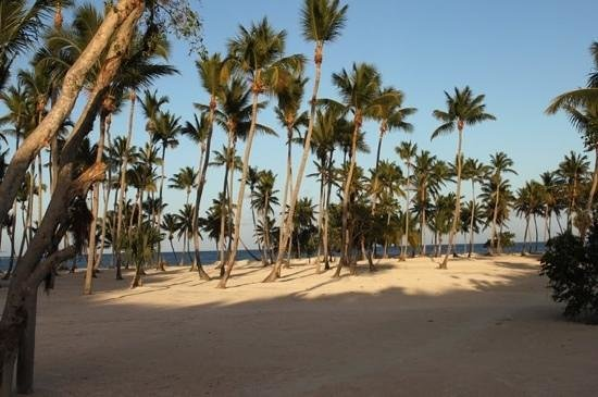 Dreams Palm Beach Punta Cana:                   beach at dolphin explorer