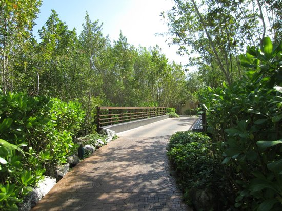 Banyan Tree Mayakoba:                                     Path from main lobby to villas