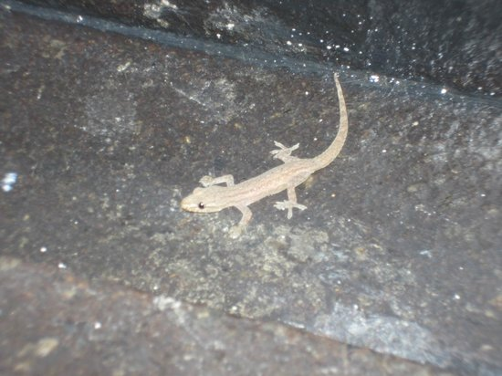 Banyan Tree Mayakoba:                                     Friendly little salamander.