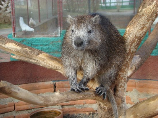 Horizontes Finca Ma Dolores:                                     The lone water rat
