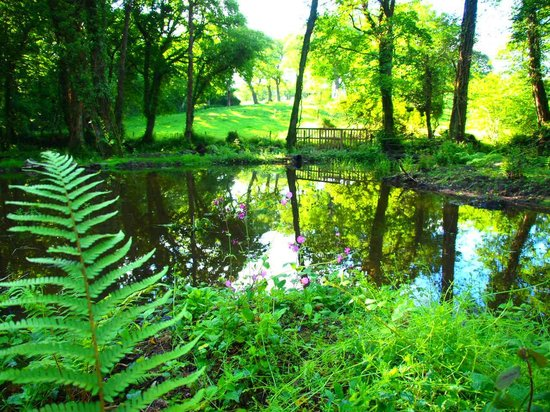 View of the Lake - Picture of Upton Castle Gardens, Tenby - TripAdvisor