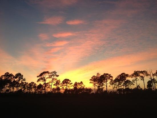 Captain Steve's Swamp Buggy Adventures:                                                       sunset