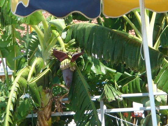 Elpida Beach Studios :                                     local plant life