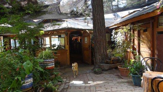 Cascada de las Animas:                   Afuera del restaurante con Nogala la perrita