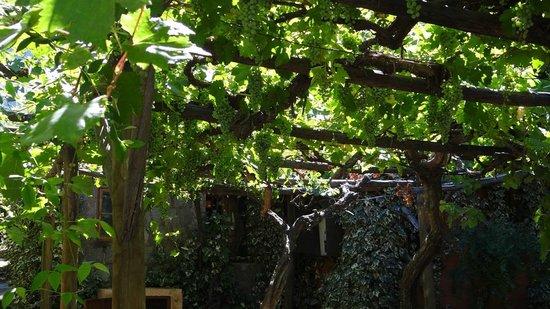 Cascada de las Animas:                   Muchos racimos de uvas