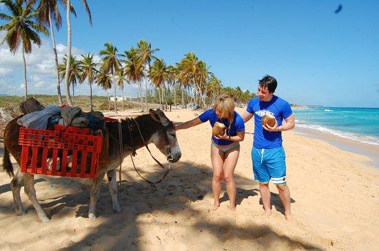 Macao Surf Camp:                                                       Coconut break                           