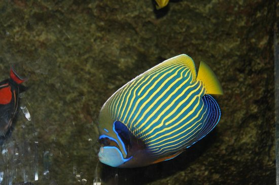 Newport Aquarium:                   Nice colorful fish