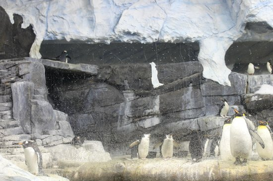 ‪‪Newport Aquarium‬:                   Penguins