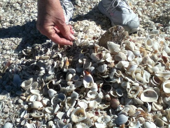 Captiva Island, Flórida:                   Shell bonanza on Alison Hagerup Beach/aka North Captiva Beach