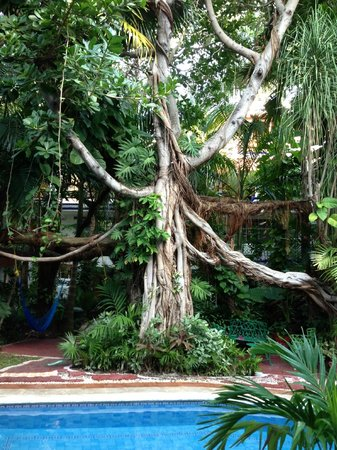 Eco-Hotel El Rey Del Caribe:                                     Beautiful Tree