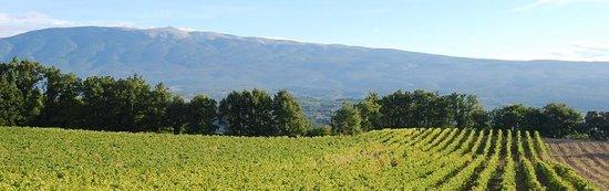 Domaine des Anges Vineyard