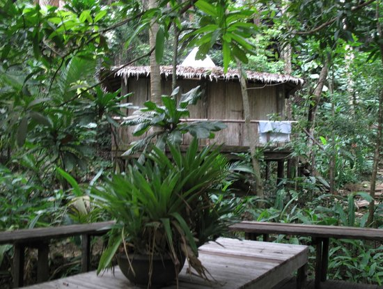 The Mangrove:                   bungalow