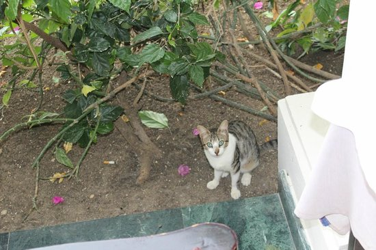 Grand Palladium Jamaica Resort & Spa:                   Hotel cat
