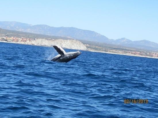 Pueblo Bonito Rose:                                     Baby whale                                  