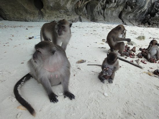 Asian Dolphins Day Tours:                   Monkey Island
