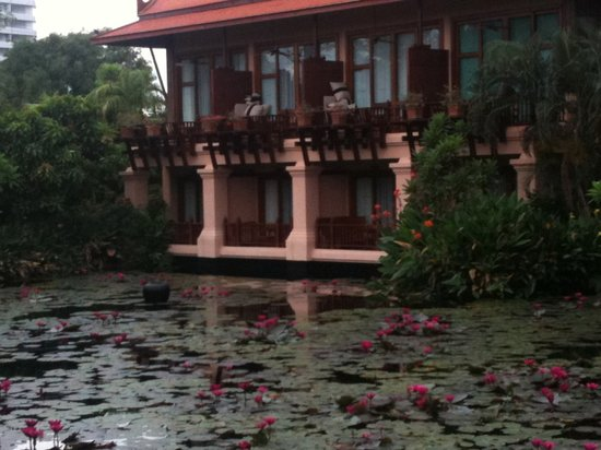 Anantara Hua Hin Resort:                   Water lilly