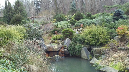 kubota garden february winter landscape - Kubota Garden