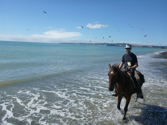 Boutique Horsetreks Day Tours :                   at the beach