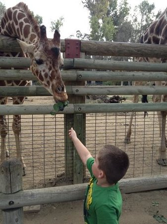 Fresno Chaffee Zoo :                                     feeding the giraffes was only $2-