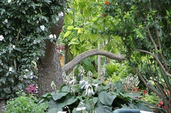 Catalpa photo de jardin aux plantes parfum es la for Jardin aux plantes