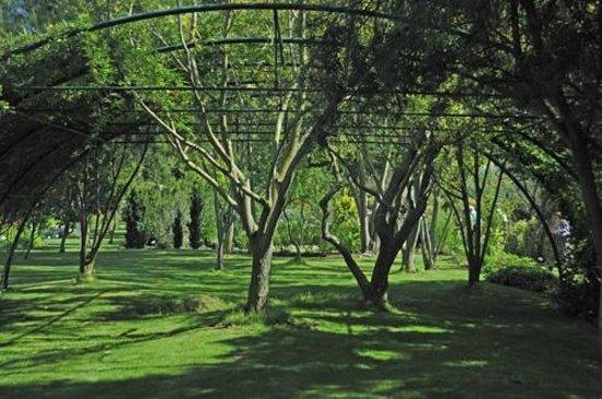 Jardin aux Plantes Parfumees la Bouichere: saules
