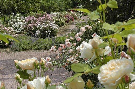 Dans la roseraie picture of jardin aux plantes parfumees for Jardin aux plantes