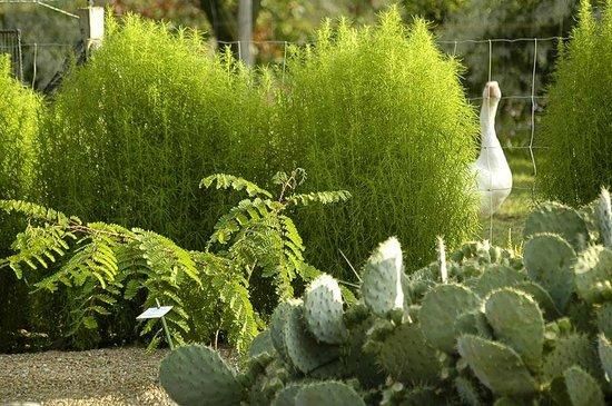 Jardin aux Plantes Parfumees la Bouichere: au jardin sec