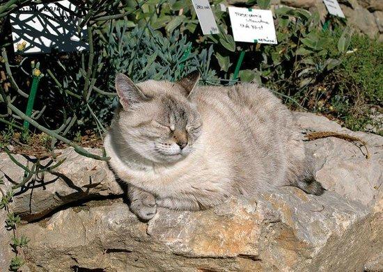 Jardin aux Plantes Parfumees la Bouichere: Minette au chaud et au sec