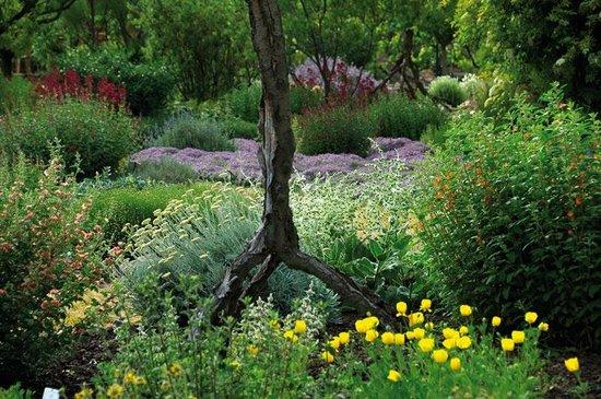 Jardin aux Plantes Parfumées la Bouichère: au jardin sec