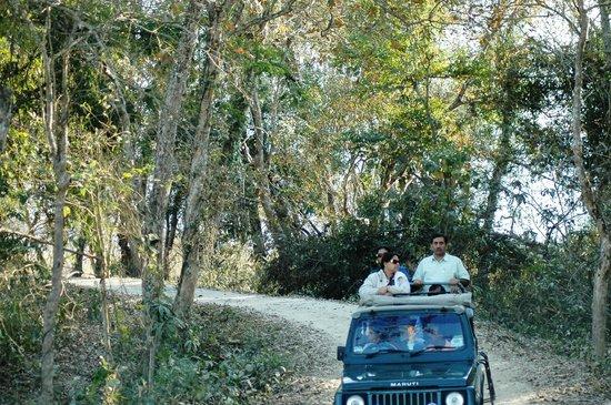 Национальный парк Казиранга