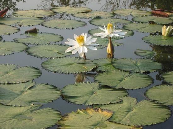 Nok's Garden Resort:                   Der Fischteich
