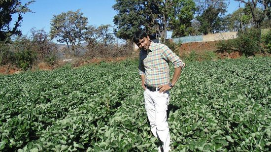 Koyna Backwater Camp:                   Pluck Strawberry and eat