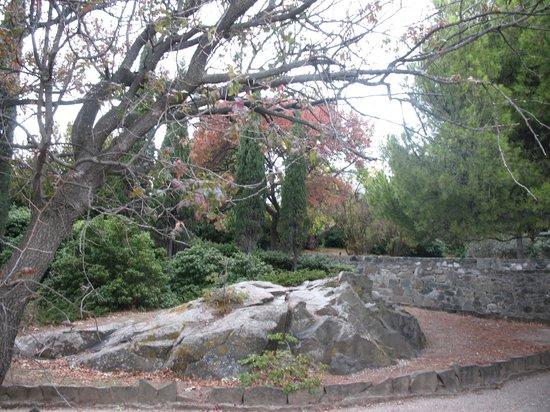Alupka:                   красивые осенние деревья