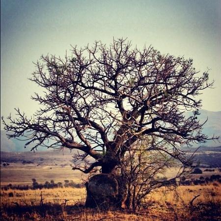 Nkomazi Game Reserve:                   beautiful