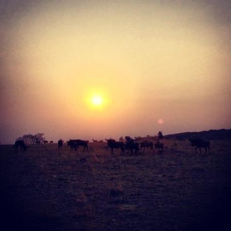 Nkomazi Game Reserve:                   Sunset