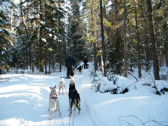 Maynooth, Canada:                   on the dog sledding trail