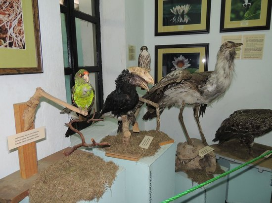 Old Boma Museum:                                     museum