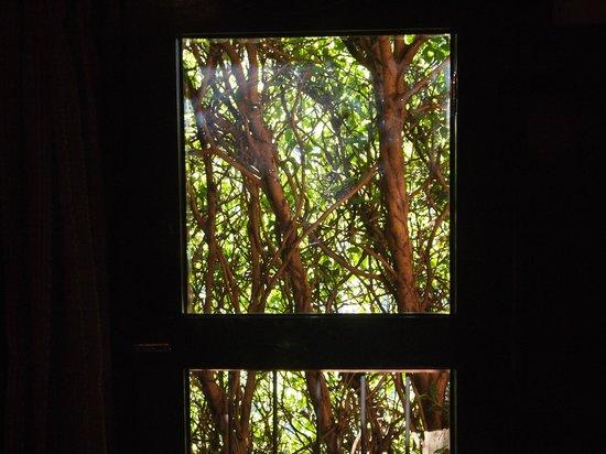 بوسادا دي دون رودريجو باناجاشل:                   View from room                 