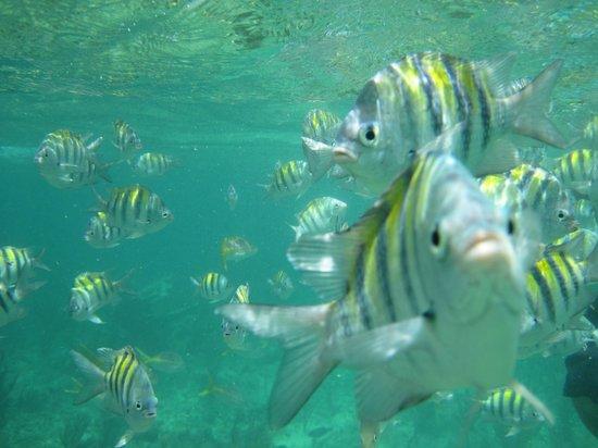 Пляж Пилар:                   A fish stealing the shot in Playa Pilar Reef