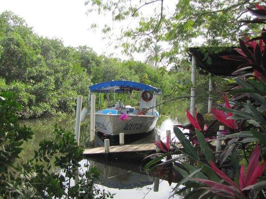 King David Tours:                   Tour boat at coconut plantation